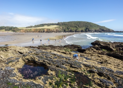 Our guide to rock pooling